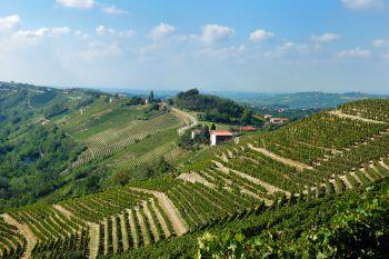 Die schöne Landschaft im Piemont lockt mit Weinbergen und kleinen Dörfchen.