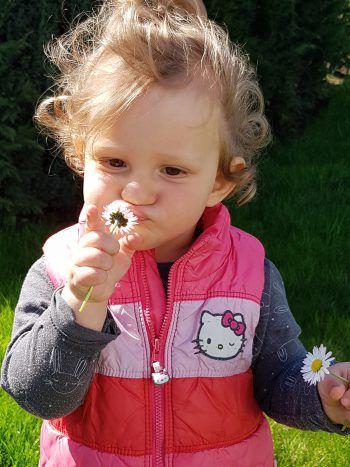 """<p class=""""caption"""">Amelie (1) aus Hohenems entdeckt die Gänseblümchen im Garten.</p>"""
