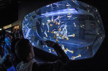 <p>Boulogne-sur-Mer. Aufmerksam: Touristen beobachten Quallen im Nausicaa-Aquarium in Frankreich.</p>