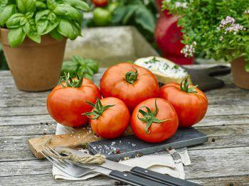 """<p class=""""caption"""">Das große, naturnah produzierte Tomaten-Sortiment verspricht Sommergenuss.</p>"""