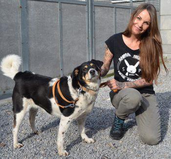 Die Hundedame Mathilda sucht ein liebevolles Plätzchen.Foto: Tierheim Marketing