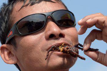 <p>Kampong Cham. Guten Appetit: Ein Kambodschaner verspeist eine mit Knoblauch fritierte Tarantel.</p>
