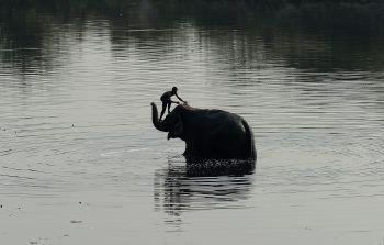 <p>Neu Delhi. Gründlich: Ein indischer Mahmout wäscht seinen Elefanten im Yamuna Fluss.</p>