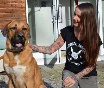 Pascha sucht ein neues, liebevolles Zuhause.Foto: Tierheim Marketing