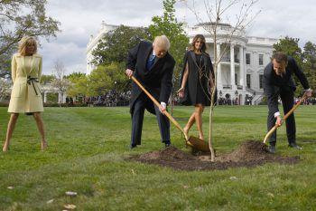<p>Washington. Symbolisch: Donald Trump und Emanuel Macron pflanzen gemeinsam einen Baum im Garten des Weißen Hauses</p>