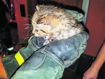Das Kätzchen konnte unverletzt gerettet werden. Foto: handout/Kreisfeuerwehrverband Landkreis Karlsruhe