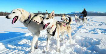 """<p class=""""caption"""">Die Schlittenfahrt mit Huskys war für die Hundeliebhaberin ein Highlight der Reise.</p>"""