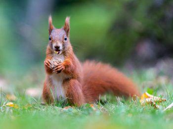 Der Hobbyjäger soll auch Eichhörnchen gegessen haben. Foto: AP