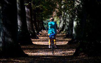 <p>Hamburg. Herbstlich: Eine Radfahrerin fährt in einem Park durch einen sonnendurchflutete Lindenallee.</p>