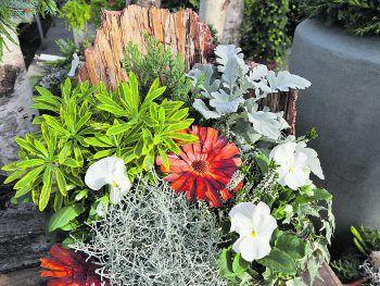 """<p class=""""caption"""">Naturnah gepflanzt und sehr schön anzusehen ist auch dieses Arrangement.</p>"""