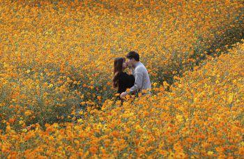 <p>Seoul. Verliebt: Ein junges Paar küsst sich inmitten einer blühenden Blumenwiese.</p>