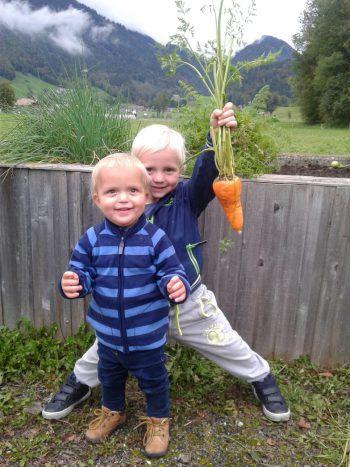 """<p class=""""caption"""">Simon und Elias bei der Karottenernte in Opas Garten.</p>"""