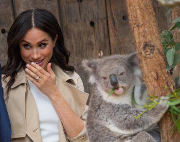 <p>Sydney. Amüsiert: Der kleine Koala Ruby zaubert Herzogin Meghan Markle ein Lächeln ins Gesicht.</p>