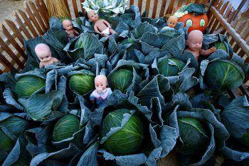 <p>Ivie. Skurril: Eine Kunst-Installation beim jährlichen Erntedankfestival in Belarus.</p>