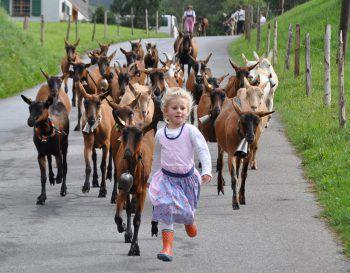 """<p class=""""caption"""">Mit diesem Schnappschuss konnte Magdalena mit ihren Ziegen die Jury überzeugen und machte so das Rennen in der Kategorie """"Print"""". Fotos: Privat</p><p class=""""caption"""" />"""