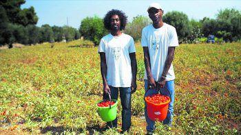 """Die Macher von """"Rotes Gold"""" besuchten Tomatenmarkfabriken in China, Kalifornien, Italien und Afrika und zeigen schonungslos die komplexen Zusammenhänge des globalen Kapitalismus mit all seinen Konsequenzen. Foto: Hunger.Macht.Profite/Rotes Gold/Javafilms"""