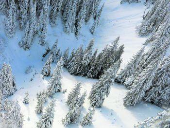 In diesem Waldabschnitt übernachtete der Skitourist unter eine Tanne.Foto: LPD Vorarlberg
