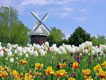 Mit Weiss Reisen im Frühling die Blütenpracht in Holland erleben. Fotos: handout/Weiss Reisen