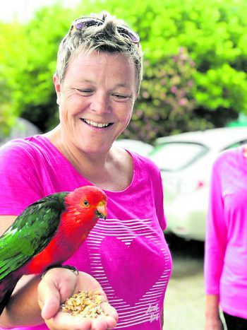 Zutraulich: Der bunte Vogel fühlt sich sichtlich wohl bei Conny.Foto: handout/Conny Gruber