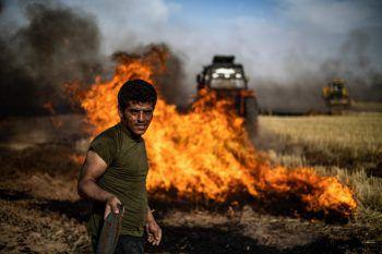 <p>al-Qahtaniyah. Verheerend: Mehrere Kornfelder an der syrisch-türkischen Grenze wurden von Unbekannten in Brand gesetzt. Fotos: AP, AFP, Reuters, APA</p>