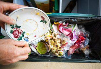 """<p class=""""title"""">               Abfall richtig entsorgen             </p><p>Einer der größten Anziehungspunkte für Ratten ist Futter. Essensreste und Haushaltsabfälle sollten deshalb immer sofort entsorgt werden – aber auch richtig. Und das heißt in dicht schließenden Tonnen. Wer Getreide-, Nahrungs- oder Futtermittel lagert, sollte das rattensicher tun.</p>"""