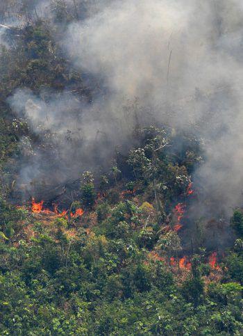 Die Waldbrände fressen sich seit Tagen durch den Regenwald. Von internationaler Seite kam heftige Kritik an der Regierung wegen ihres bislang fehlenden Eingreifens.Foto: AFP