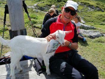 """<p class=""""caption"""">Eine Einsendung von Gertrud: Die Ziegen auf der Alpe Lünsersee hatten Appetit auf die Vorarlberger Nachrichten.</p>"""
