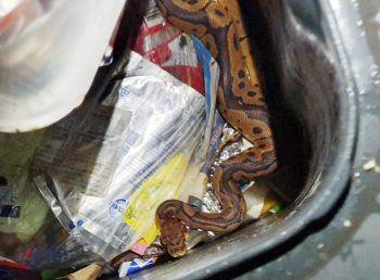 Wie das Tier in den Mülleimer gelangte, wird nun ermittelt.Foto: APA
