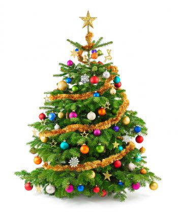 Der Christbaum kann an Weihnachten gelobt werden. Fotos: Shutterstock