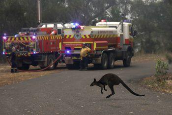 <p>Mangrove Mountain. Gefährdet: Ein Wallaby bringt sich vor den Bränden nördlich von Sydney in Sicherheit.</p>