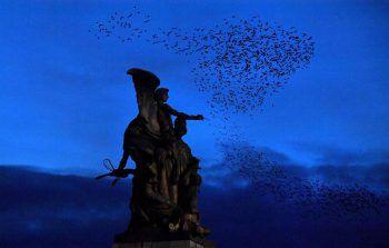 <p>Rom. Mystisch: Ein Schwarm Stare fliegt in der Dämmerung über das Viktor-Emanuelsdenkmal auf der Piazza Venezia.</p>