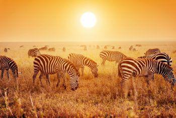 """<p class=""""title"""">               Südafrika             </p><p>Das ideale Klima in unserem Winterhalbjahr sowie nur eine Stunde Zeitverschiebung machen das Land am Kap der guten Hoffnung zu einem perfekten Reiseziel für Entdecker, Naturliebhaber und Genießer. Die abwechslungsreiche Landschaft, die interessanten Städte und die grandiose Tierwelt vereinen sich hier mit der Ursprünglichkeit Afrikas. Die Big Five bekommt man am besten auf einer Safari in einem der vielen Reservate und Nationalparks vor die Kameralinse.</p><p />"""