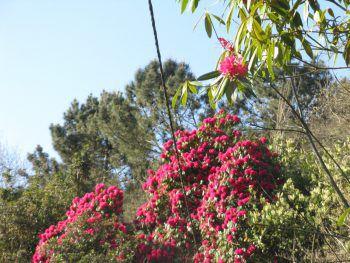 Blühende und grüne Landschaften erwarten die Reisenden auf Madeira.