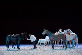 """<p class=""""title"""">""""Facets of Riding""""</p><p>""""Pferde in Meisterhand"""", das bedeutet, von den Besten zu lernen: Hier bekommt man Einblicke in die faszinierende Welt der Freiheitsdressur, es wird erklärt, worauf es in einer soliden Grundausbildung im Fahrsport ankommt. Ein weiterer Spitzen-Ausbilder teilt sein Wissen über das Westernreiten sowie zu den verschiedenen Manövern.</p><p />"""