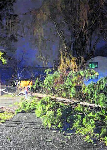 In Bludenz blockierte ein umgestürzter Baum eines Kindergartens eine Straße.