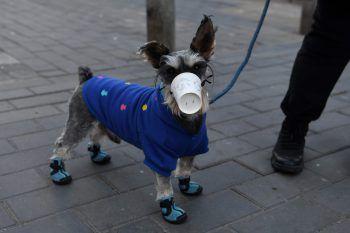 <p>Peking. Geschützt: Dieser kleine Hund trägt eine provisorische Maske zum Schutz vor dem Coronavirus.</p>