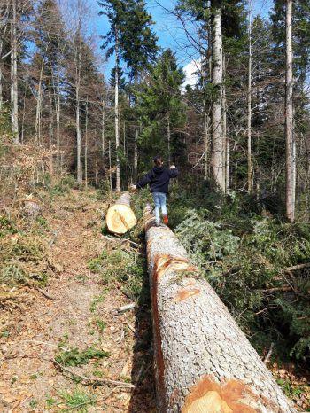 Umgestürzte Baumstämme laden zumBalancieren ein. Fotos: handout/Ölz