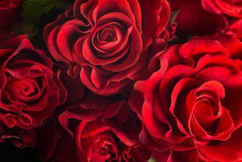 """<p>Zunftball Lochau</p><p>Der Zunftball Lochau findet am Freitag unter dem Motto """"Lange Nacht der Rosen"""" statt. Einlass ab 19.30 Uhr. Die """"X-Large Partyband"""" sorgt für Stimmung.</p>"""