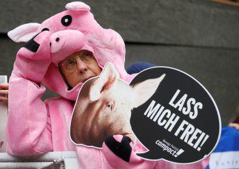 <p>Berlin. Engagiert: Ein als Ferkel verkleideter Demonstrant protestiert gegen Haltungsbedingungen in Schweinefarmen.</p>