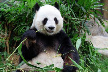 <p>Nicht nur für Familien eine tolle Variante. Der Tiergarten Schönbrunn verzückt mit kleinen Elefanten, Eisbären und den putzigen Pandas, im Prater kann mit dem historischen Riesenrad fahren und im Natur-historischen Museum Exotisches und Vergangenes bestaunen.</p>