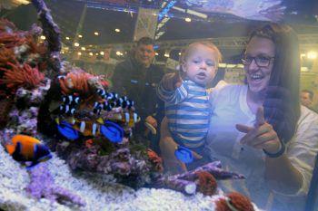 Viele neue Highlights gibt es für Klein und Groß auf der Aqua-Fisch-Messe in Friedrichshafen zu bestaunen. Fotos: handout/Messe Friedrichshafen