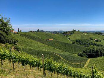 """<p class=""""title"""">               Die grüne Steiermark             </p><p>Die steirische Toskana erleben, Wein trinken, Brettljause essen, Graz besuchen, die Schilcher Weinstraße entlang laufen und vieles mehr. Diese Reise ist buchbar vom 7. bis 11. Oktober um 487 Euro.</p>"""