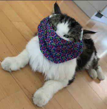 """<p class=""""caption"""">Bei Sylvia gilt die Maskenpflicht auch für ihre Katze.</p>"""