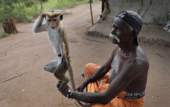 <p>Nachchikulama. Künstlerisch: Ein Mann in Sri Lanka führt einem Publikum mit seinem Affen Tricks vor.</p>