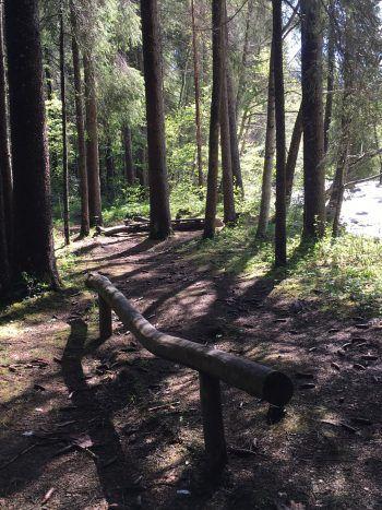 Zahlreiche Wurzel- und Forstwege säumen den Wanderpfad.Foto: handout/Ölz
