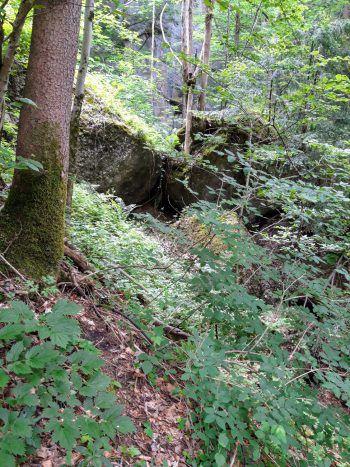 Mitten im Sagenwald. Fotos: handout/Ölz