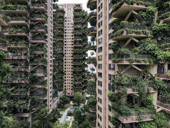 """<p>Chengdu. Unbewohnt: Bei einem """"Green Housing""""-Projekt in der chinesischen Stadt blieben die Wohnungen großteils leer. Das Resultat: Die Pflanzen wuchern jetzt Balkone und Fassade zu.</p>"""
