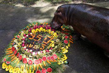 """<p>Chon Buri. Jubiläum: Das Flusspferd """"Mae Mali"""" freut sich im Zoo Khao Kheow (Thailand) über dieses reichhaltige Buffet mit Obst und Gemüse. Der feierliche Anlass: der 55. Geburtstag des Tieres.</p>"""