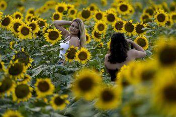 Lawrence (Kansas). Pose: Ein riesiges Sonnenblumenfeld dient diesen beiden Damen als Kulisse für ein Foto-Shooting. Fotos: APA/AP/AFP/Reuters