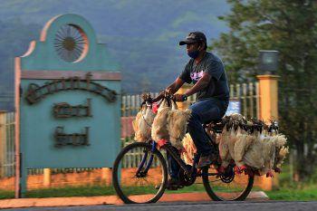 <p>Tegucigalpa. Ungewöhnlich: Dieser Mann fährt in der Hauptstadt von Honduras mit seinen Hühnern zum Markt. Als Transportmittel dient sein Fahrrad. Das zentralamerikanische Land hat ebenfalls schwer mit Covid-19 zu kämpfen.</p>